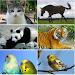Download Animal sounds 1.9 APK