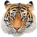 Download Animal Sounds 8.2 APK
