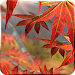 Download Autumn Tree Free Wallpaper 1.4 APK