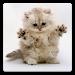 Download Cat Wallpapers! 5.0 APK