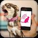 Download Dog Teaser 2.2 APK