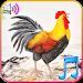 Download Funny Wake Up Ringtones 1.1 APK