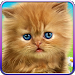 Download Talking baby cat. 1.480.0.221 APK