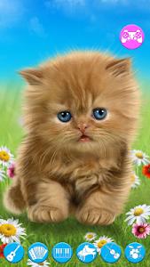 Download Talking baby cat. 1.480.0.221 APK