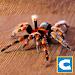 Download Ultimate Spider Simulator 1.2 APK